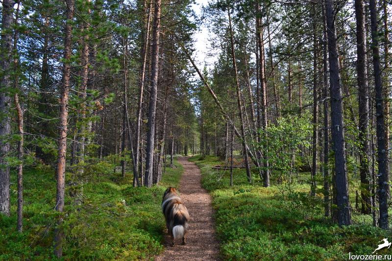 Пошли в лес гулять а попали на секс